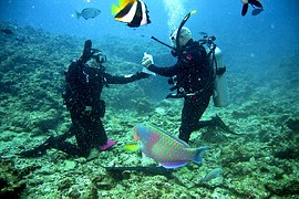 Discover Scuba Diving Montego Bay Jamaica
