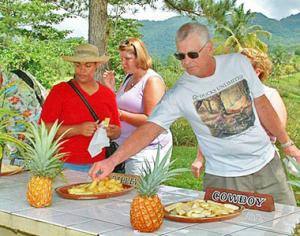 Pineapple farm tours